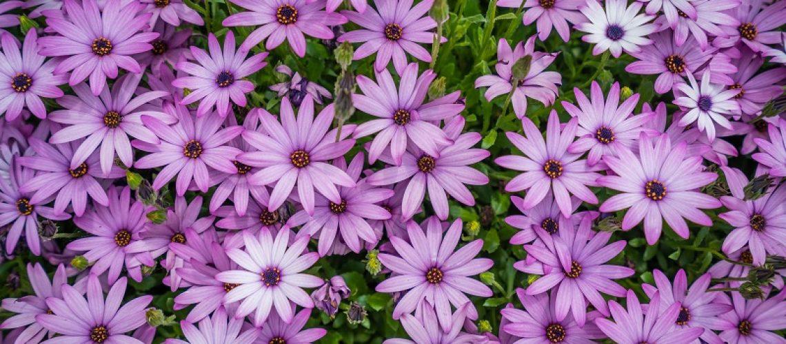 loja-coroa-de-flores-