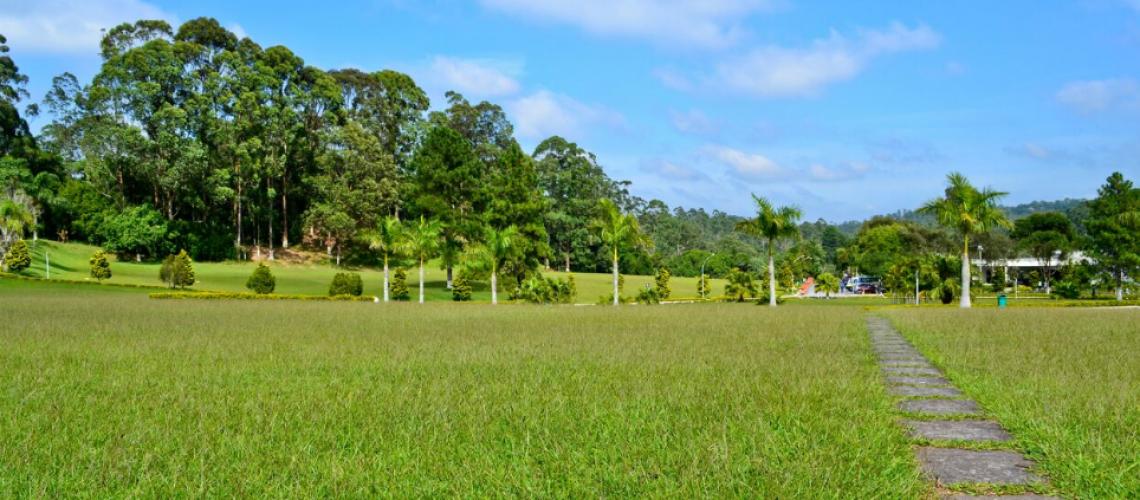 floricultura cemitério girassois